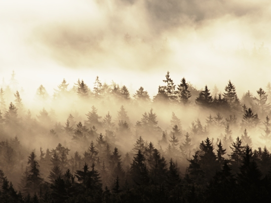 Beautiful Autumnal Landscape With Mountain View, Morning Foggy V